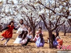 中国梨乡山西隰县万亩梨花闹春邀客畅游花海(图)