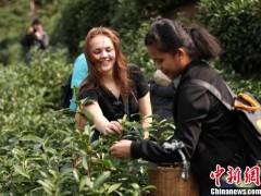 第十届黄山毛峰文化节开幕